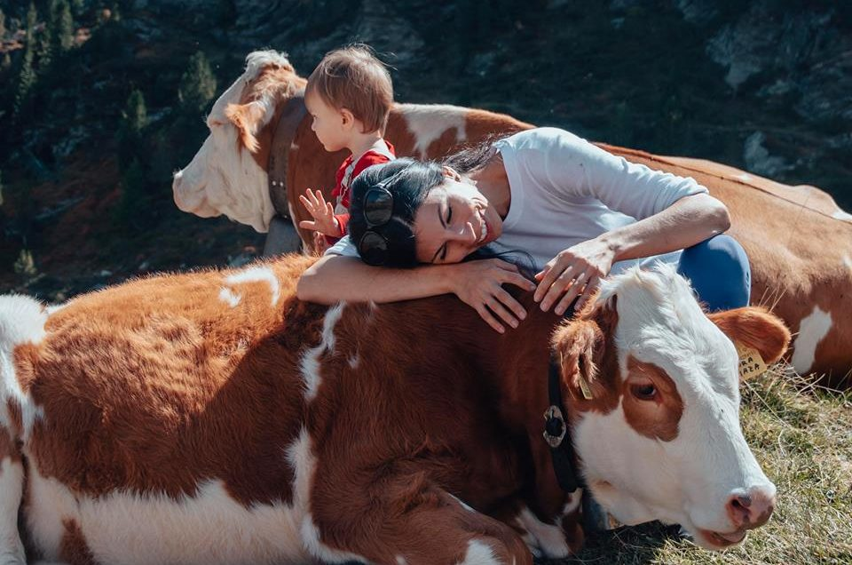 Hugging a cow